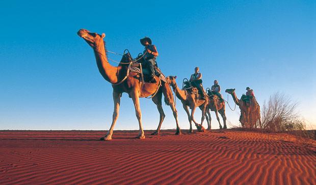 Возене на камили