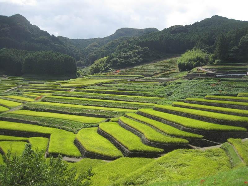 Оризови тераси