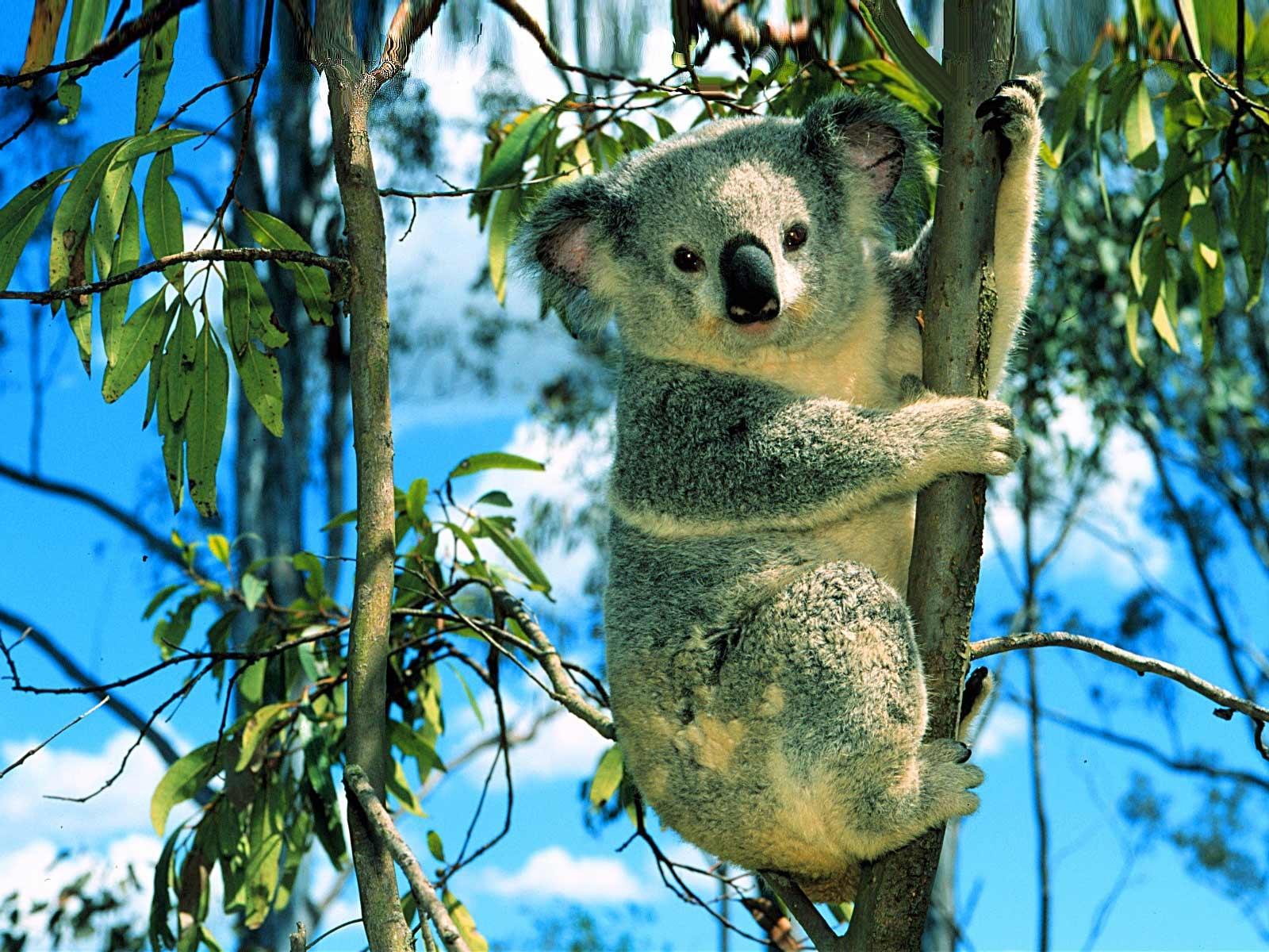 Зоологическа градина Австралия